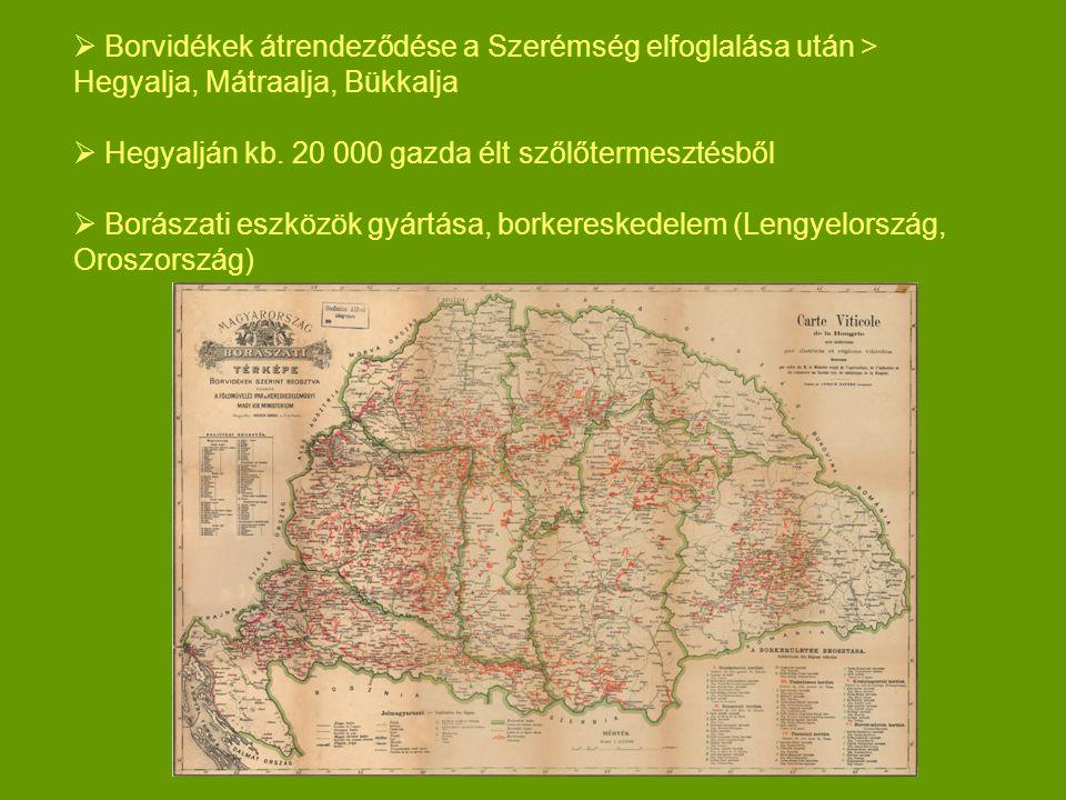  Borvidékek átrendeződése a Szerémség elfoglalása után > Hegyalja, Mátraalja, Bükkalja  Hegyalján kb. 20 000 gazda élt szőlőtermesztésből  Borászat