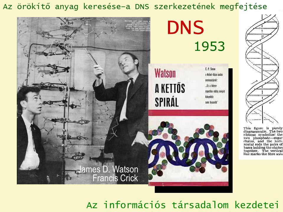 James D. Watson Francis Crick 1953 DNS Az örökítő anyag keresése–a DNS szerkezetének megfejtése Az információs társadalom kezdetei