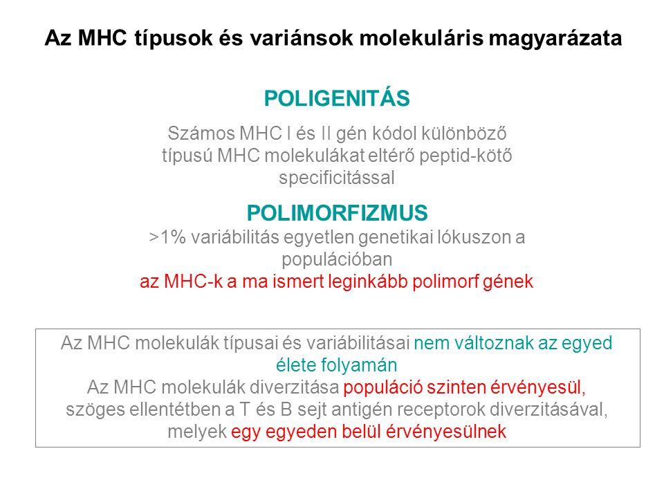 Az MHC típusok és variánsok molekuláris magyarázata POLIMORFIZMUS >1% variábilitás egyetlen genetikai lókuszon a populációban az MHC-k a ma ismert leg