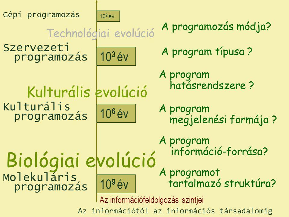 A biológiai információáramlás Fehérjeszintézis