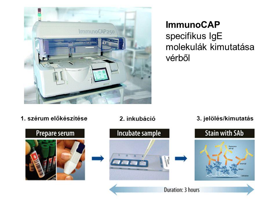 ImmunoCAP specifikus IgE molekulák kimutatása vérből 1. szérum előkészítése 2. inkubáció 3. jelölés/kimutatás