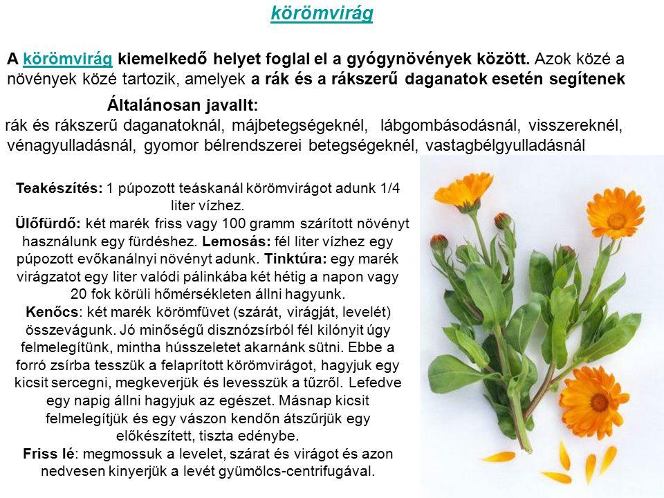 A körömvirág kiemelkedő helyet foglal el a gyógynövények között.