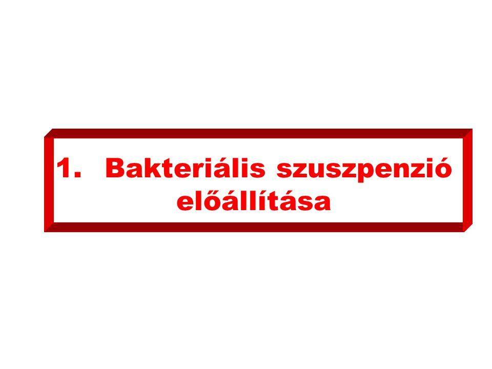 1.Bakteriális szuszpenzió előállítása