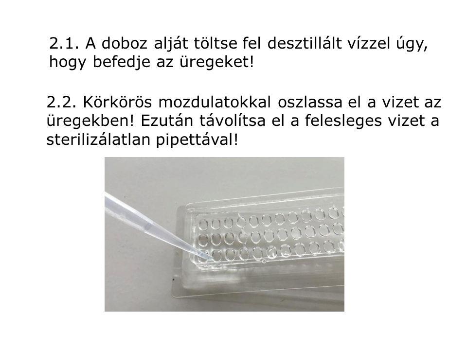 2.1. A doboz alját töltse fel desztillált vízzel úgy, hogy befedje az üregeket! 2.2. Körkörös mozdulatokkal oszlassa el a vizet az üregekben! Ezután t