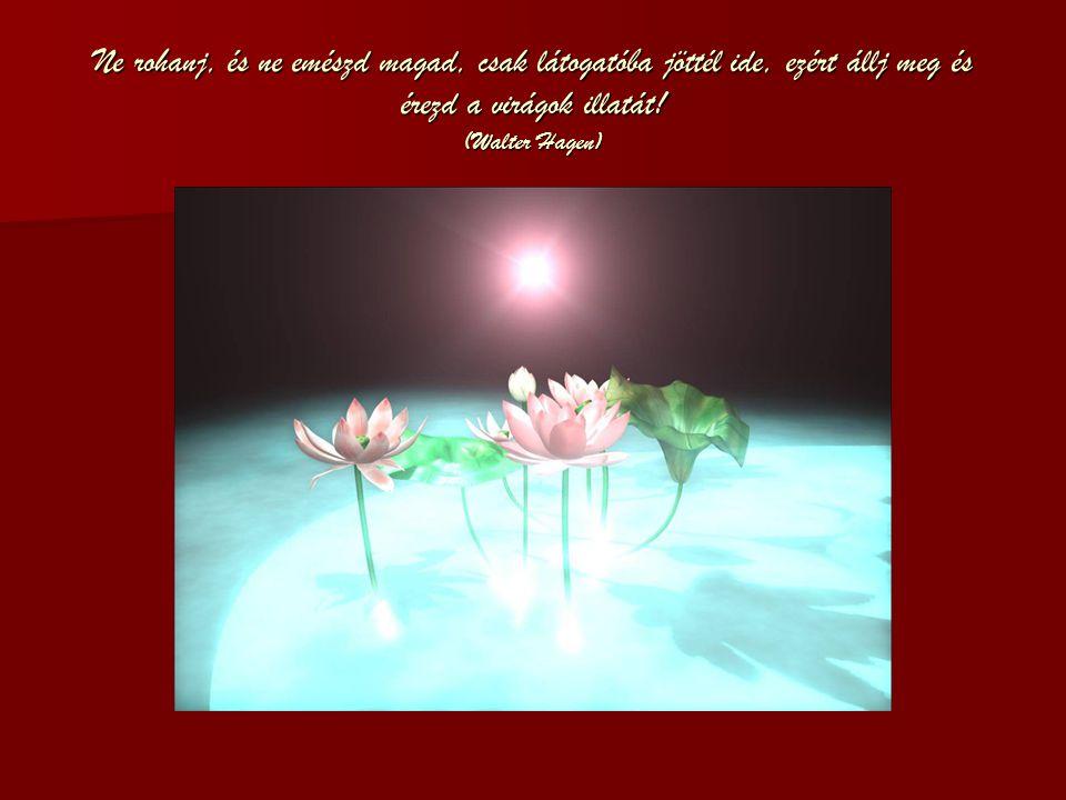 Ne rohanj, és ne emészd magad, csak látogatóba jöttél ide, ezért állj meg és érezd a virágok illatát! (Walter Hagen)