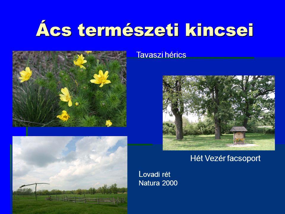 Ács természeti kincsei Tavaszi hérics L ovadi rét Natura 2000 Hét Vezér facsoport
