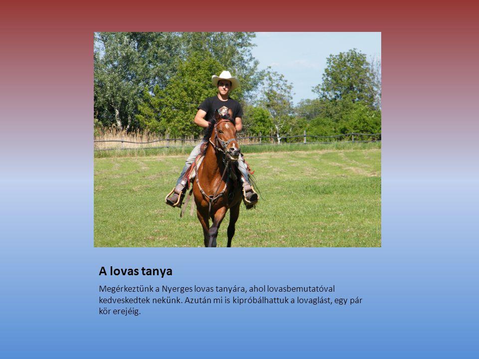 A lovas tanya Megérkeztünk a Nyerges lovas tanyára, ahol lovasbemutatóval kedveskedtek nekünk.