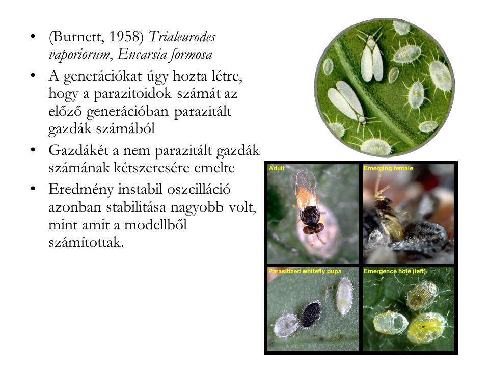 •(Burnett, 1958) Trialeurodes vaporiorum, Encarsia formosa •A generációkat úgy hozta létre, hogy a parazitoidok számát az előző generációban parazitál