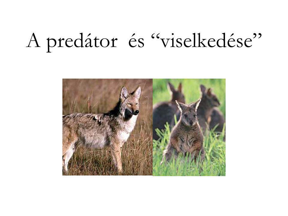 """A predátor és """"viselkedése"""""""