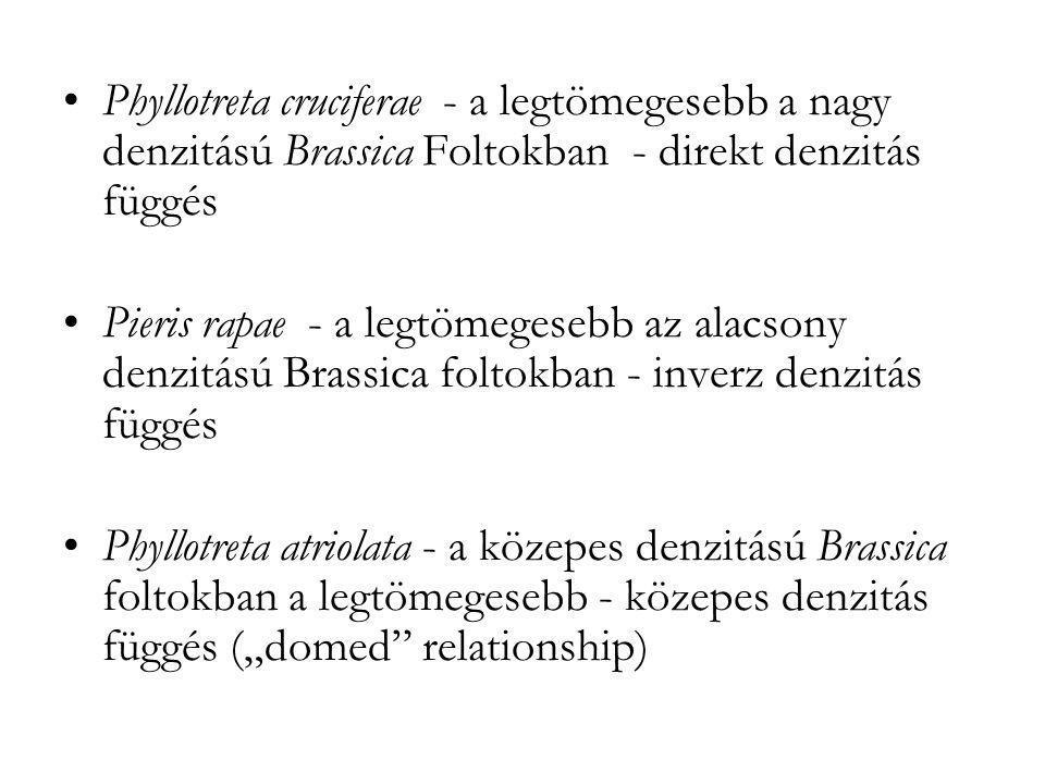 •Phyllotreta cruciferae - a legtömegesebb a nagy denzitású Brassica Foltokban - direkt denzitás függés •Pieris rapae - a legtömegesebb az alacsony den