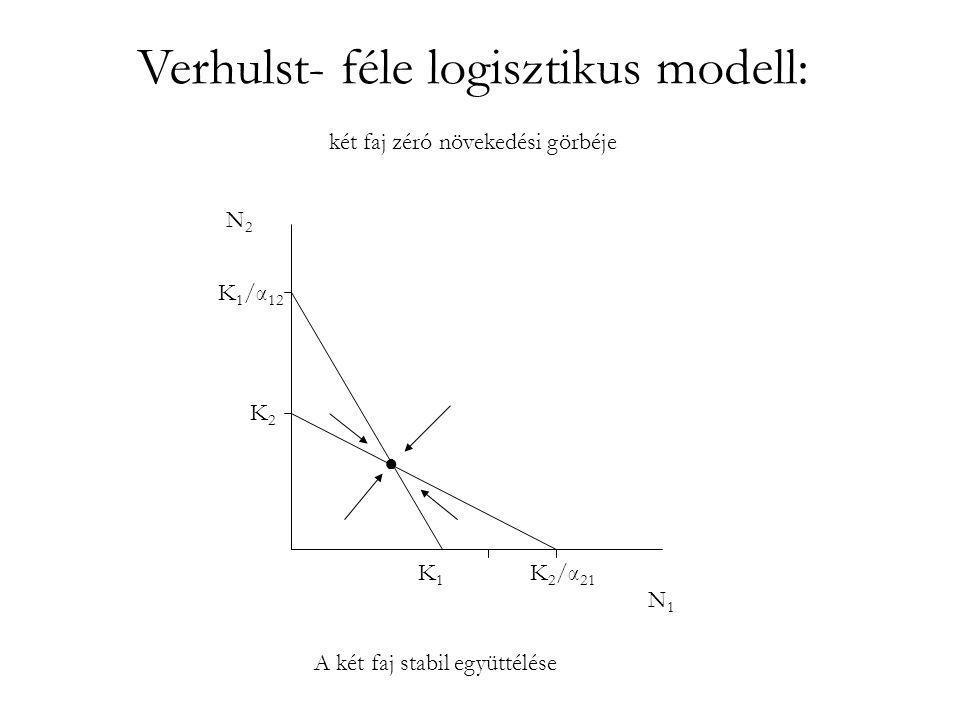 Verhulst- féle logisztikus modell: •K 2 >K 1 /α 12 ; K 2 >K 2 /α 21 • complete competitors cannot coexist (Hardin, 1960) •K 2 <K 1 /α 12 ; K 1 <K 2 /α 21 •α 12 α 21 < 1 •A kompetticó határt szab az együtt élő fajok hasonlóságának és számának.