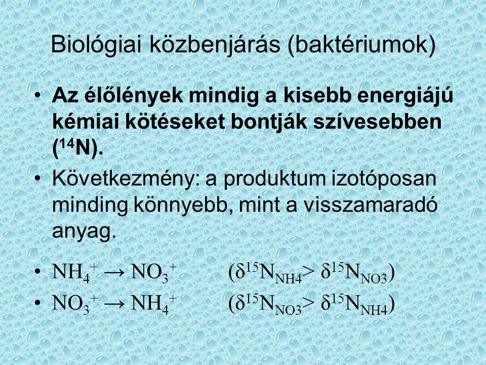 Biológiai közbenjárás (baktériumok) •Az élőlények mindig a kisebb energiájú kémiai kötéseket bontják szívesebben ( 14 N).
