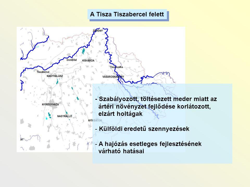 A Tisza Tiszabercel felett - Szabályozott, töltésezett meder miatt az ártéri növényzet fejlődése korlátozott, elzárt holtágak - Külföldi eredetű szenn