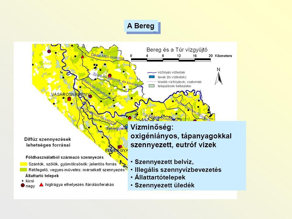 A Bereg Vízminőség: oxigéniányos, tápanyagokkal szennyezett, eutróf vizek • Szennyezett belvíz, • Illegális szennyvízbevezetés • Állattartótelepek • S