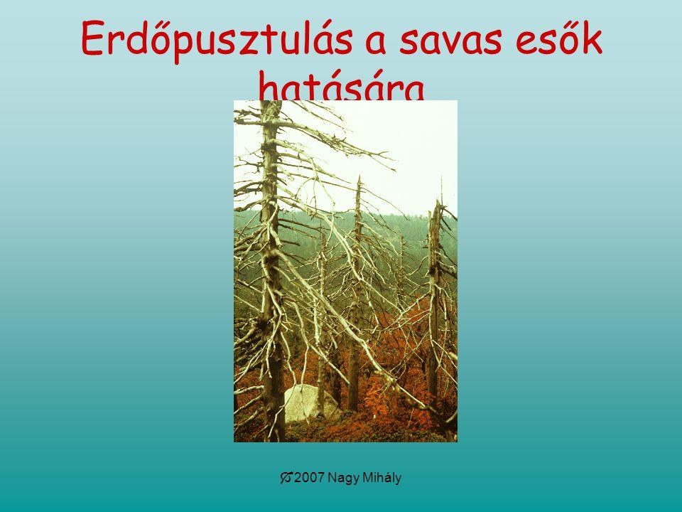  2007 Nagy Mihály Erdőpusztulás a savas esők hatására