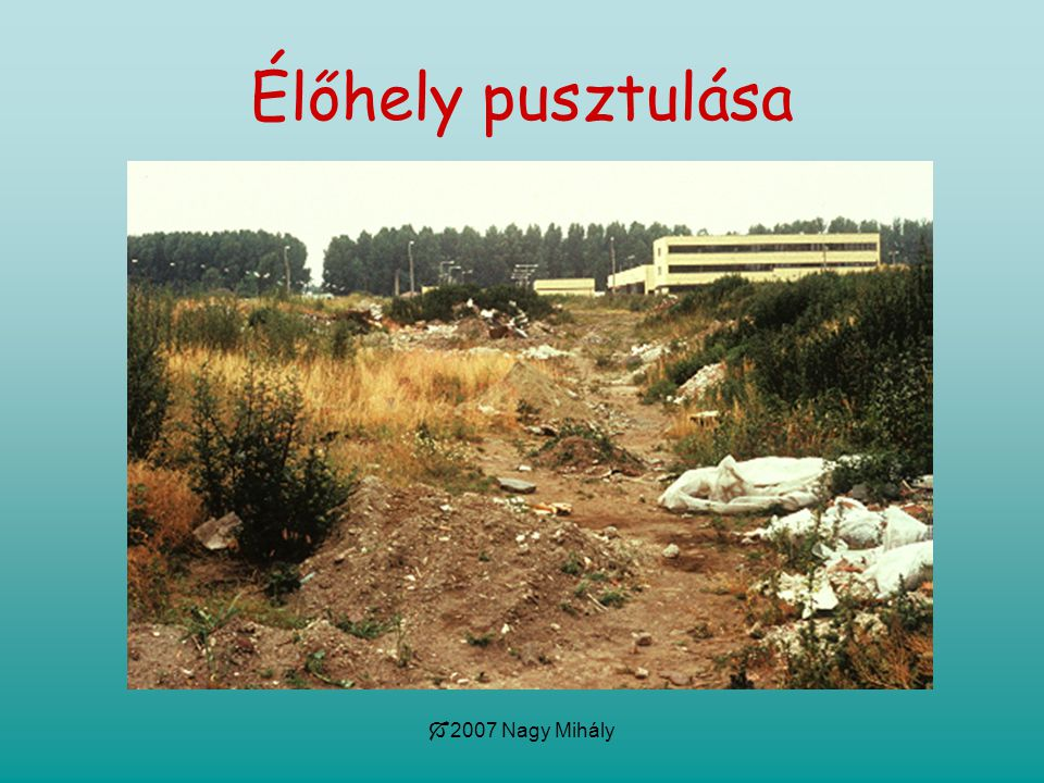  2007 Nagy Mihály Élőhely pusztulása