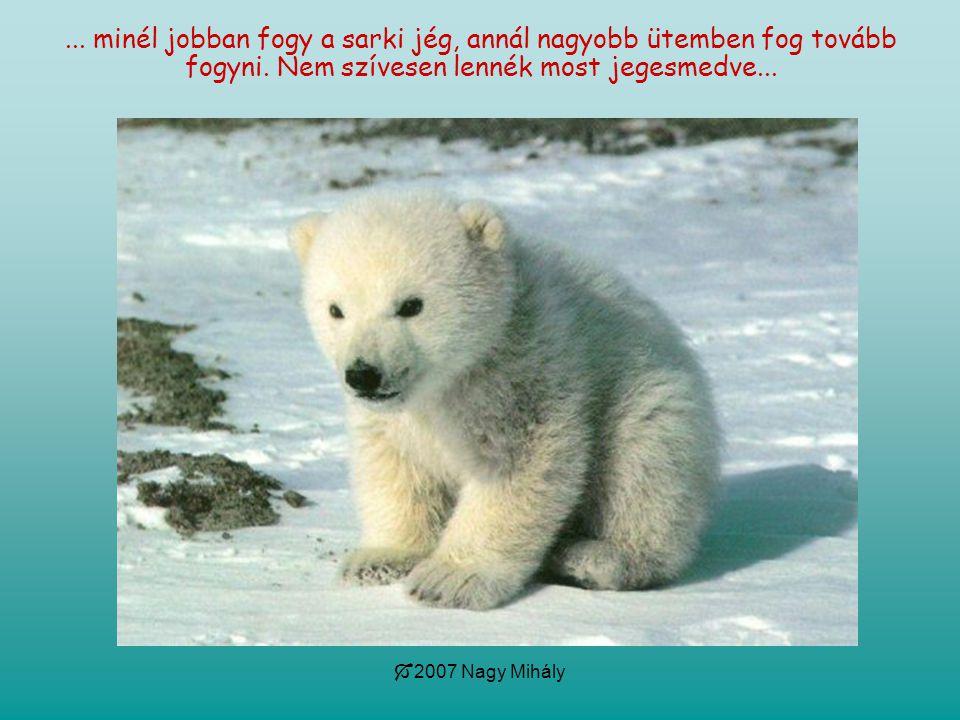  2007 Nagy Mihály... minél jobban fogy a sarki jég, annál nagyobb ütemben fog tovább fogyni. Nem szívesen lennék most jegesmedve...