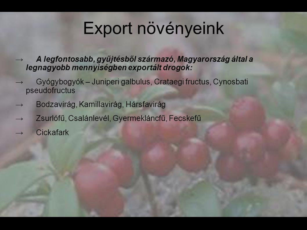 Export növényeink → A legfontosabb, gyűjtésből származó, Magyarország által a legnagyobb mennyiségben exportált drogok: → Gyógybogyók – Juniperi galbu