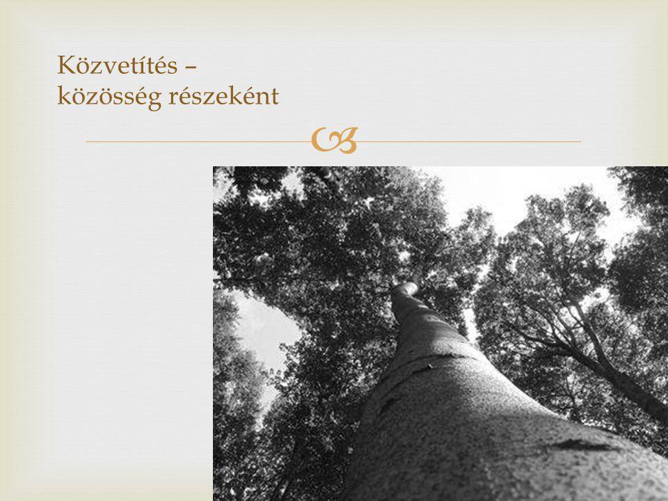 """  """"A szél kihívásaira a fa gyökereivel válaszol  Női közösségek tagjai vagyunk: vérségi, baráti, szellemi közösségeké Senki sem sziget"""
