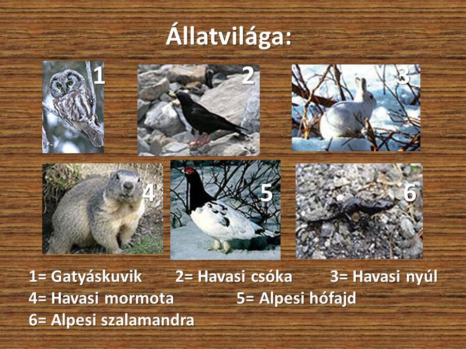 Állatvilága: 1 2 3 1 2 3 4 5 6 4 5 6 1= Gatyáskuvik 2= Havasi csóka 3= Havasi nyúl 4= Havasi mormota 5= Alpesi hófajd 6= Alpesi szalamandra