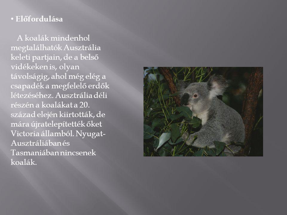 • Előfordulása A koalák mindenhol megtalálhatók Ausztrália keleti partjain, de a belső vidékeken is, olyan távolságig, ahol még elég a csapadék a megf