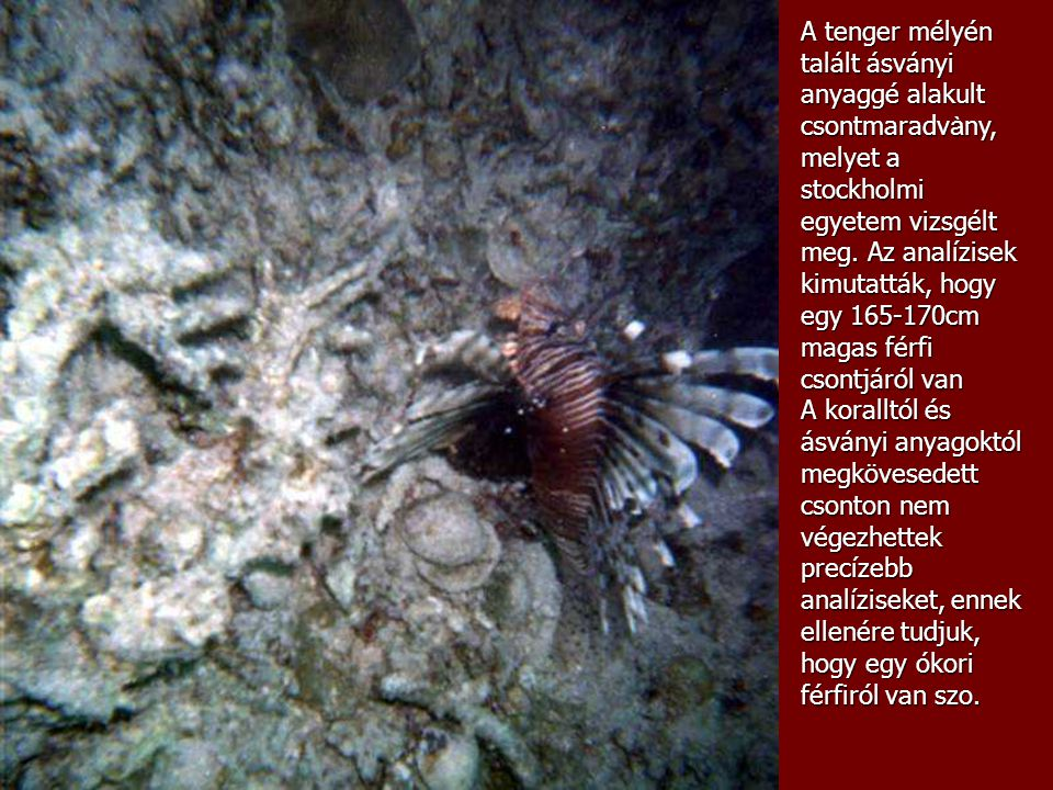 A tenger mélyén talált ásványi anyaggé alakult csontmaradv à ny, melyet a stockholmi egyetem vizsgélt meg.