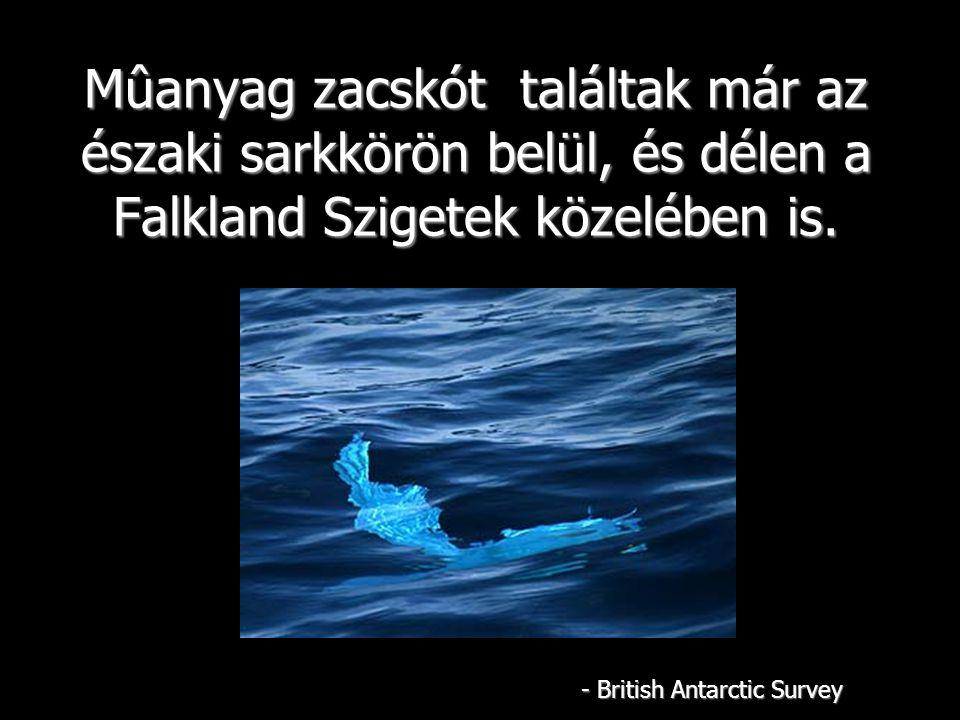 Mûanyag zacskót találtak már az északi sarkkörön belül, és délen a Falkland Szigetek közelében is.