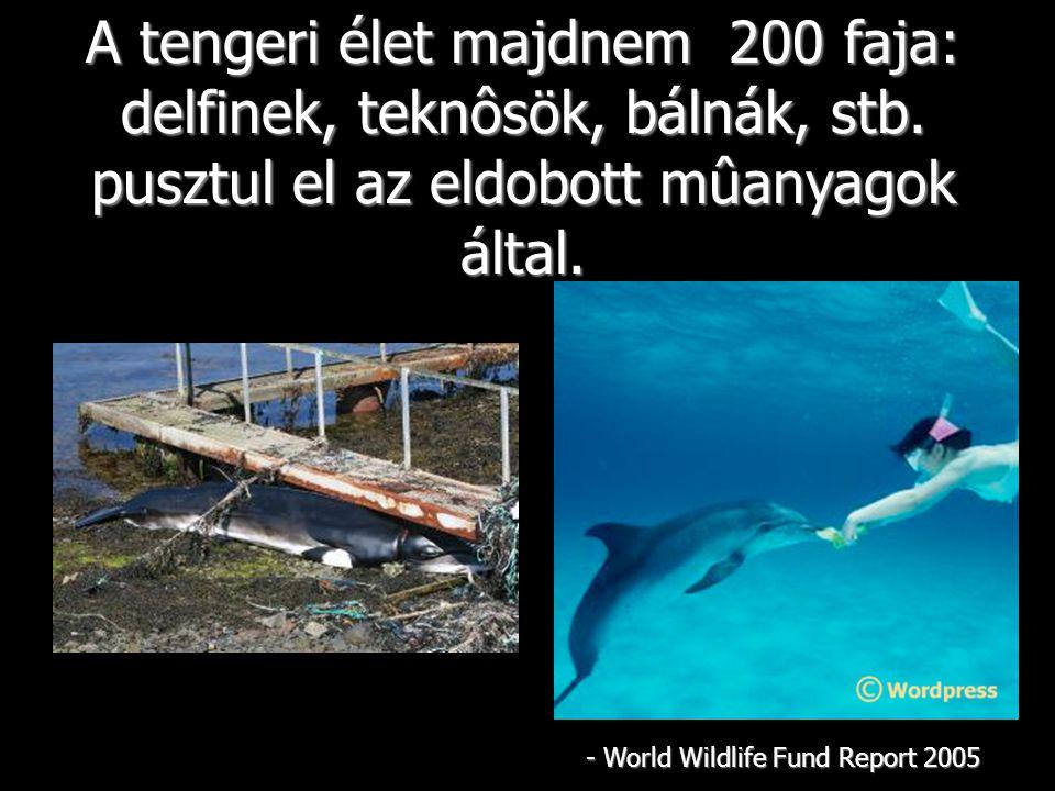 A tengeri élet majdnem 200 faja: delfinek, teknôsök, bálnák, stb.