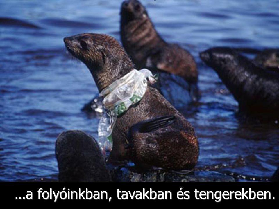 Az étellel összetévesztett mûanyag pusztulást okoz. - World Wildlife Fund Report 2005