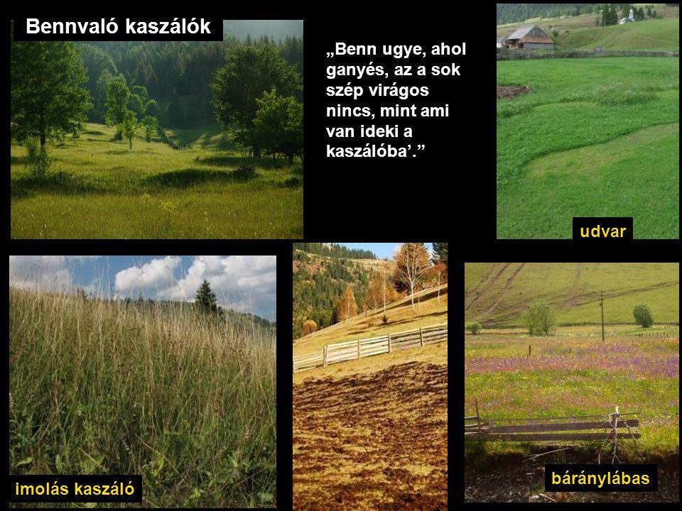"""Bennvaló kaszálók udvar báránylábas imolás kaszáló """"Benn ugye, ahol ganyés, az a sok szép virágos nincs, mint ami van ideki a kaszálóba'."""