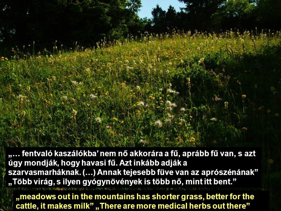 """""""… fentvaló kaszálókba' nem nő akkorára a fű, aprább fű van, s azt úgy mondják, hogy havasi fű. Azt inkább adják a szarvasmarháknak. (…) Annak tejeseb"""
