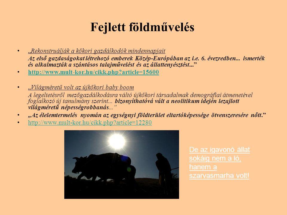 """Fejlett földművelés •""""Rekonstruálják a kőkori gazdálkodók mindennapjait Az első gazdaságokat létrehozó emberek Közép-Európában az i.e."""