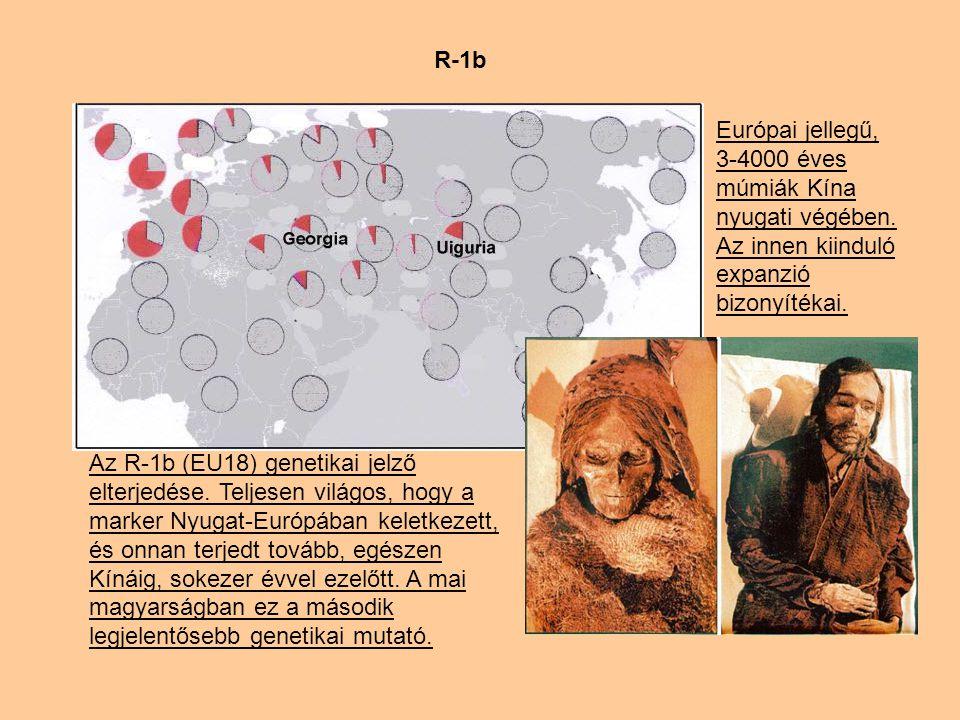 R-1b Európai jellegű, 3-4000 éves múmiák Kína nyugati végében.