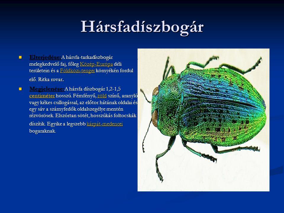 Hársfadíszbogár  Elterjedése: A hársfa-tarkadíszbogár melegkedvelő faj, főleg Közép-Európa déli területein és a Földközi-tenger környékén fordul elő.