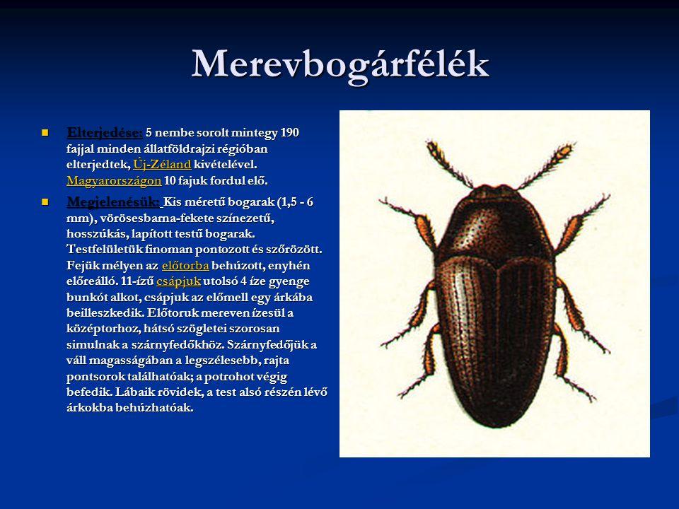 Merevbogárfélék  Elterjedése: 5 nembe sorolt mintegy 190 fajjal minden állatföldrajzi régióban elterjedtek, Új-Zéland kivételével.