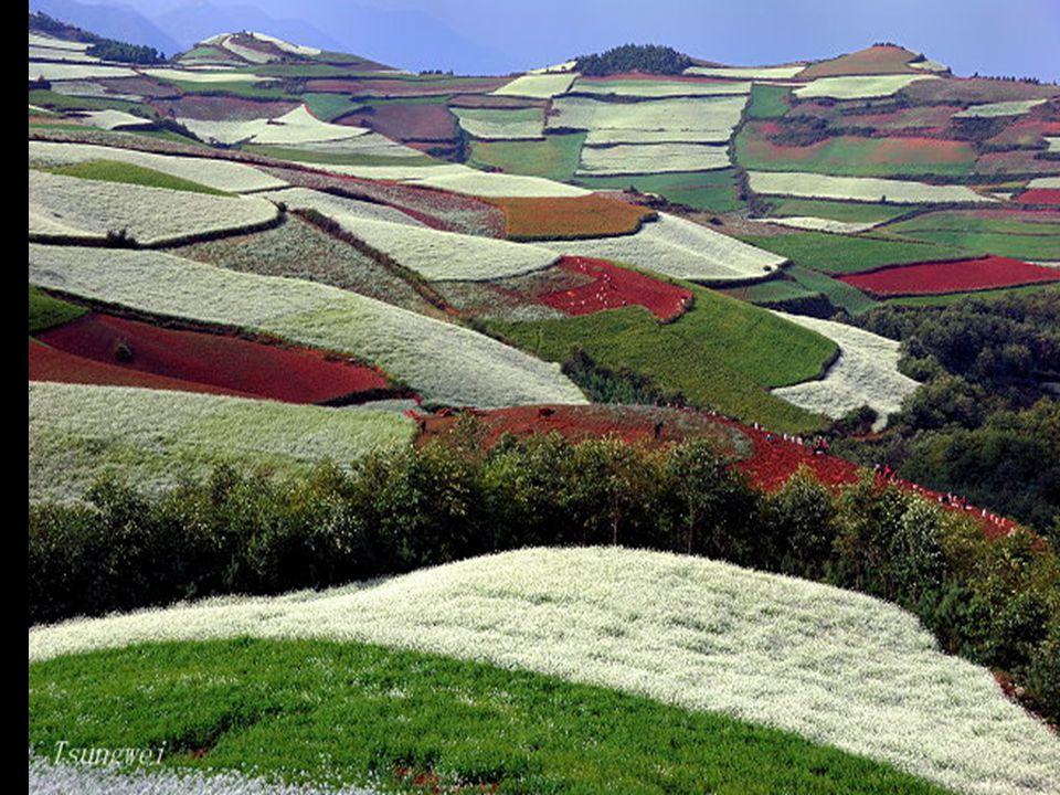 Öt-hat féle színben pompáznak a hegyek-völgyek. A növények (burgonya, zab, kukorica, olajos virágok, zöldségek stb.) úgy vannak elrendezve, hogy messz
