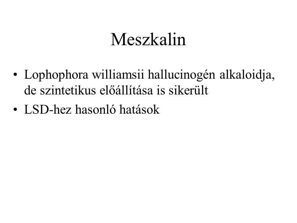Meszkalin •Lophophora williamsii hallucinogén alkaloidja, de szintetikus előállítása is sikerült •LSD-hez hasonló hatások