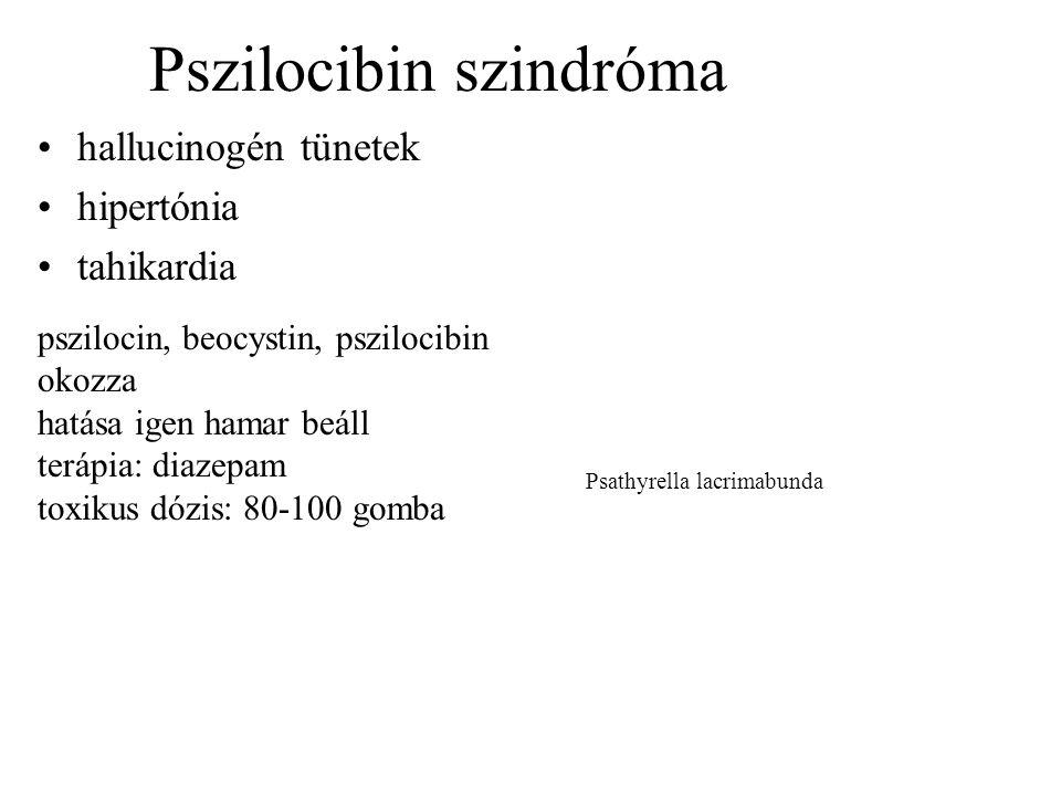 Pszilocibin szindróma •hallucinogén tünetek •hipertónia •tahikardia pszilocin, beocystin, pszilocibin okozza hatása igen hamar beáll terápia: diazepam toxikus dózis: 80-100 gomba Psathyrella lacrimabunda