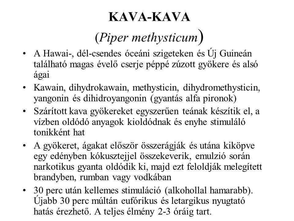 KAVA-KAVA (Piper methysticum ) •A Hawai-, dél-csendes óceáni szigeteken és Új Guineán található magas évelő cserje péppé zúzott gyökere és alsó ágai •Kawain, dihydrokawain, methysticin, dihydromethysticin, yangonin és dihidroyangonin (gyantás alfa pironok) •Szárított kava gyökereket egyszerűen teának készítik el, a vízben oldódó anyagok kioldódnak és enyhe stimuláló tonikként hat •A gyökeret, ágakat először összerágják és utána kiköpve egy edényben kókusztejjel összekeverik, emulzió során narkotikus gyanta oldódik ki, majd ezt feloldják melegített brandyben, rumban vagy vodkában •30 perc után kellemes stimuláció (alkohollal hamarabb).