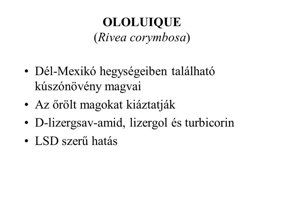 OLOLUIQUE (Rivea corymbosa) •Dél-Mexikó hegységeiben található kúszónövény magvai •Az őrölt magokat kiáztatják •D-lizergsav-amid, lizergol és turbicorin •LSD szerű hatás