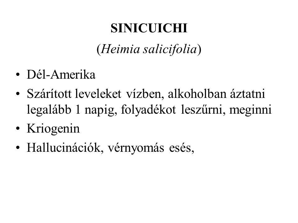 SINICUICHI (Heimia salicifolia) •Dél-Amerika •Szárított leveleket vízben, alkoholban áztatni legalább 1 napig, folyadékot leszűrni, meginni •Kriogenin •Hallucinációk, vérnyomás esés,