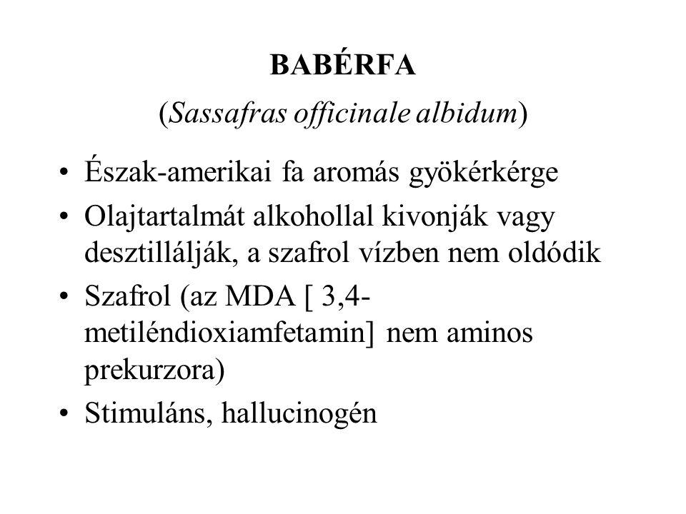 BABÉRFA (Sassafras officinale albidum) •Észak-amerikai fa aromás gyökérkérge •Olajtartalmát alkohollal kivonják vagy desztillálják, a szafrol vízben nem oldódik •Szafrol (az MDA [ 3,4- metiléndioxiamfetamin] nem aminos prekurzora) •Stimuláns, hallucinogén