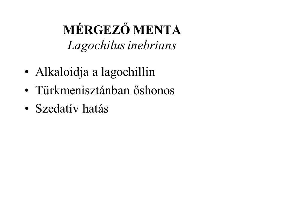 MÉRGEZŐ MENTA Lagochilus inebrians •Alkaloidja a lagochillin •Türkmenisztánban őshonos •Szedatív hatás