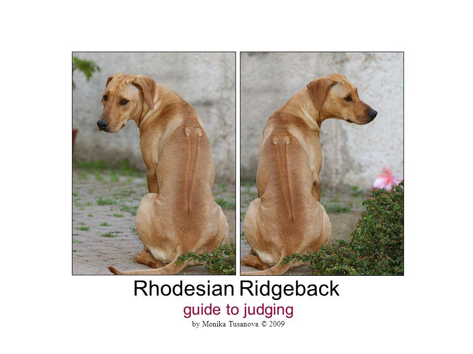 Rhodesian Ridgeback guide to judging by Monika Tusanova © 2009