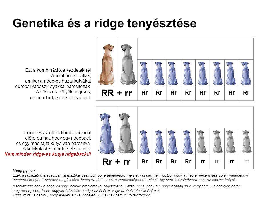 Rr + rr Rr RrRrRrRrrrrr Ennél és az előző kombinációnál előfordulhat, hogy egy ridgeback és egy más fajta kutya van párositva. A kölykök 50%-a ridge-e