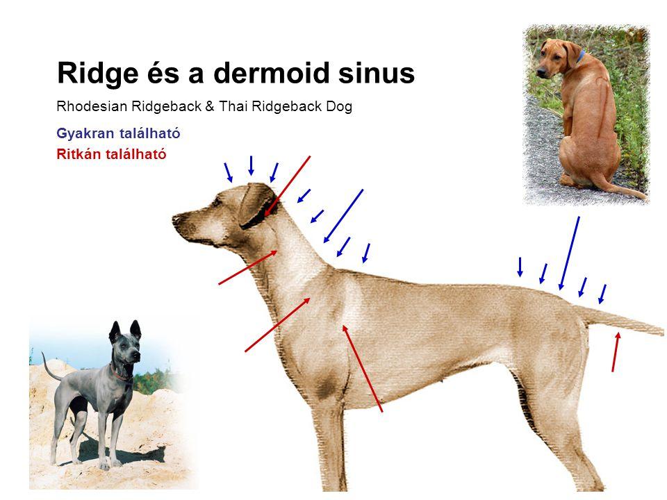 Ridge és a dermoid sinus Rhodesian Ridgeback & Thai Ridgeback Dog Gyakran található Ritkán található