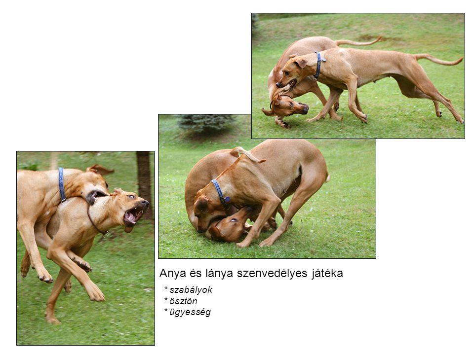 Rr + rr Rr RrRrRrRrrrrr Ennél és az előző kombinációnál előfordulhat, hogy egy ridgeback és egy más fajta kutya van párositva.