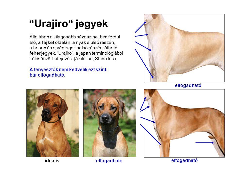 """""""Urajiro"""" jegyek Általában a világosabb búzaszínekben fordul elő, a fej két oldalán, a nyak elülső részén, a hason és a végtagok belső részén látható"""