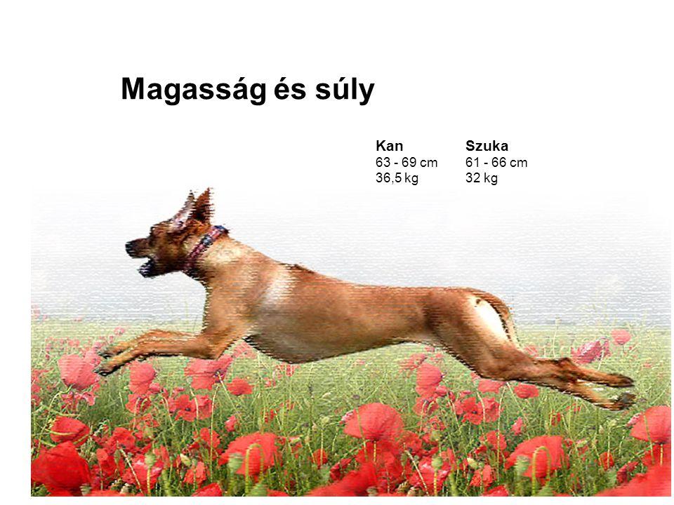 Magasság és súly Kan 63 - 69 cm 36,5 kg Szuka 61 - 66 cm 32 kg