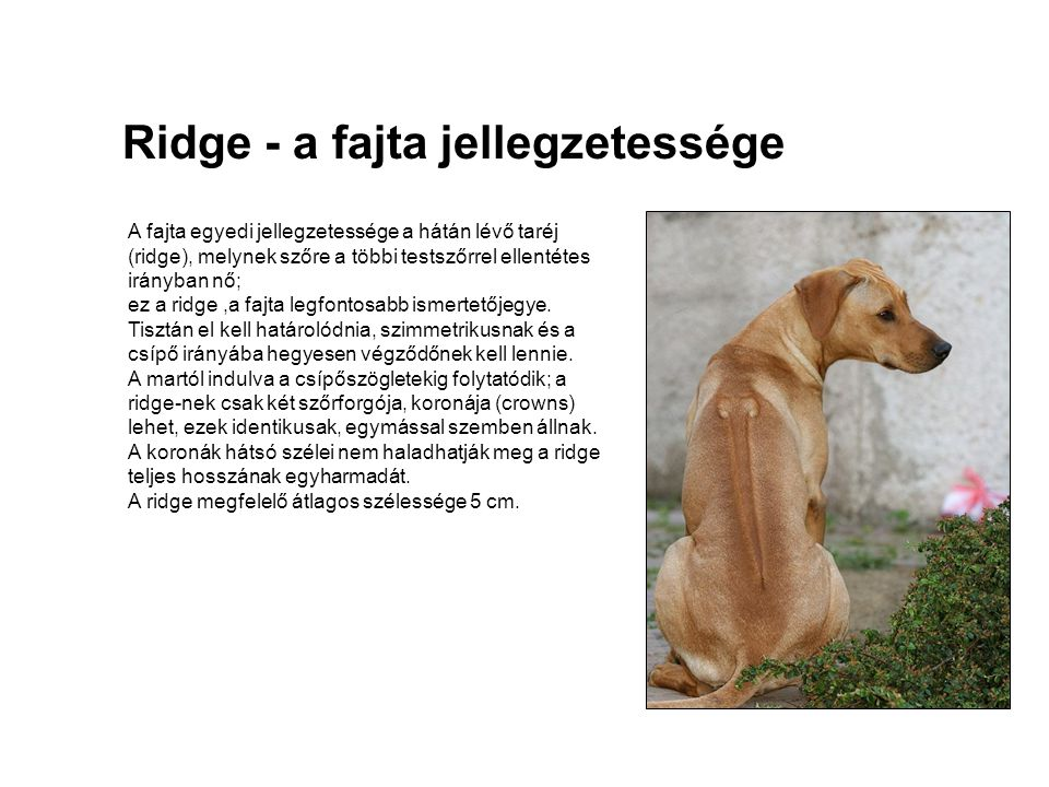 Ridge - a fajta jellegzetessége A fajta egyedi jellegzetessége a hátán lévő taréj (ridge), melynek szőre a többi testszőrrel ellentétes irányban nő; e